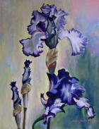 Estelle's Irises