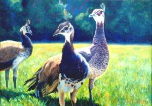 This sunlit painting of 'Peahens' also comes with a memory of it being stolen from a local showing.